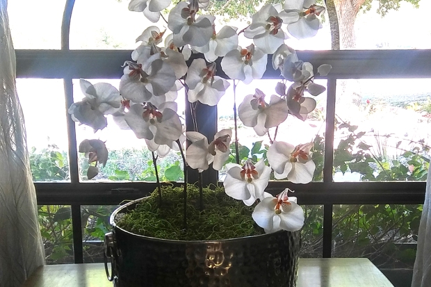 Orchids-no-leaves