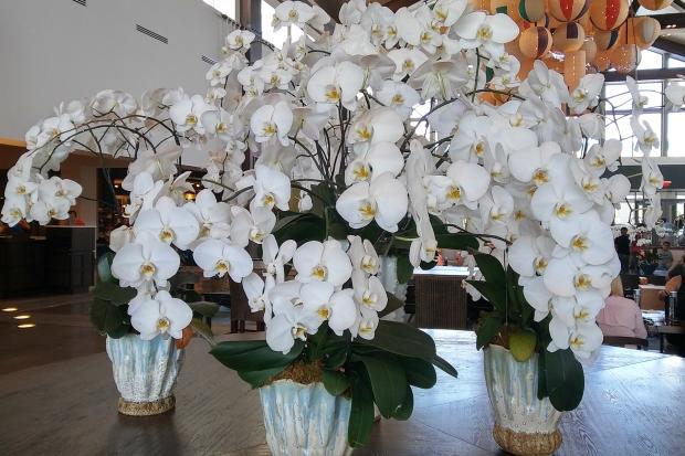 Resort-Orchids